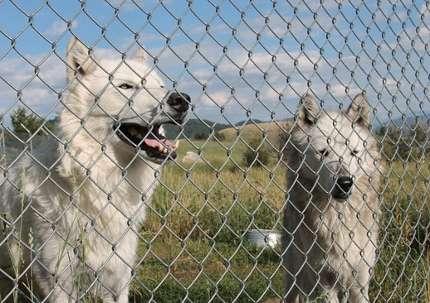 Border fences need not harm large fauna