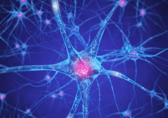 Brain mechanisms in drug addiction – new brain pathways revealed