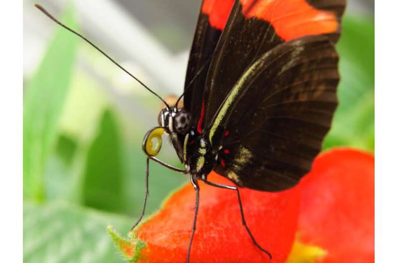 Butterflies use differences in leaf shape to distinguish between plants