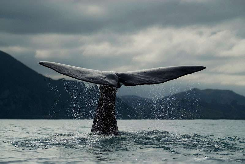 Bycatch is the biggest killer of whales