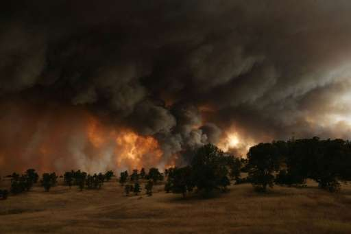 California's drought crisis has caused wildfires, decimated forests, threatened animal species and deprived thousands of homes o