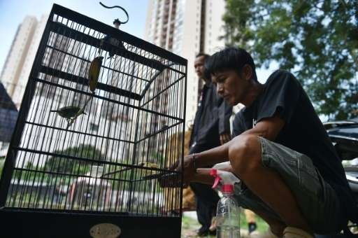 Capturing any native birds from the wild—whether they are protected or not—is illegal in Indonesia but law enforcement is lax