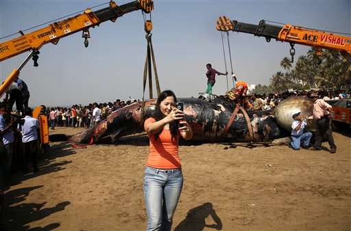 Carcass of whale washes ashore in western India