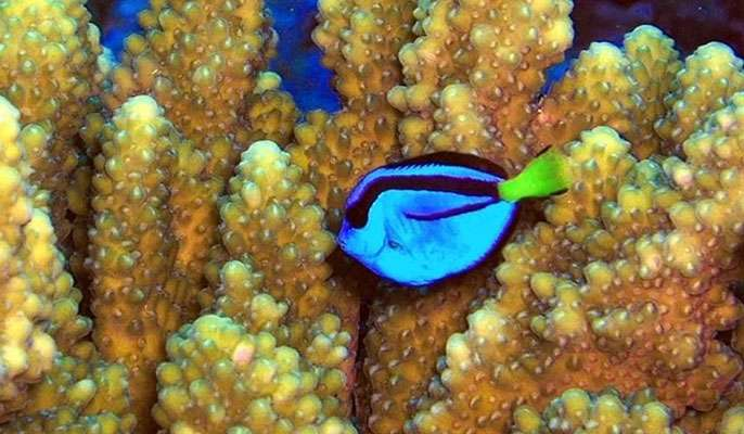 Care about coral reefs? Protect the 'lawnmowers'