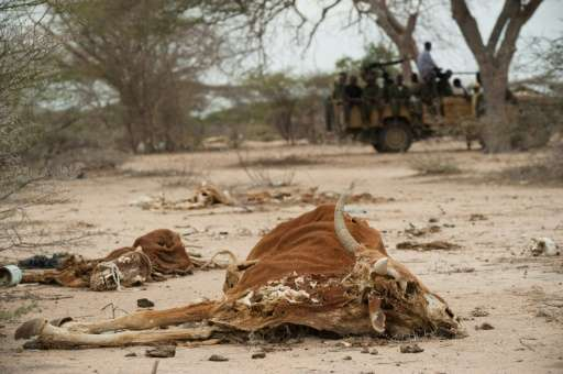 Cattle carcasses pictured outside the Somalian town of Dhobley during a drought