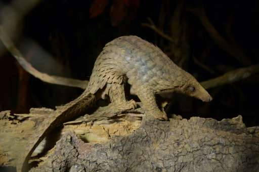 Chinese customs have seized over three tonnes of pangolin scales - an estimated 7,500 of the creatures could have been killed to