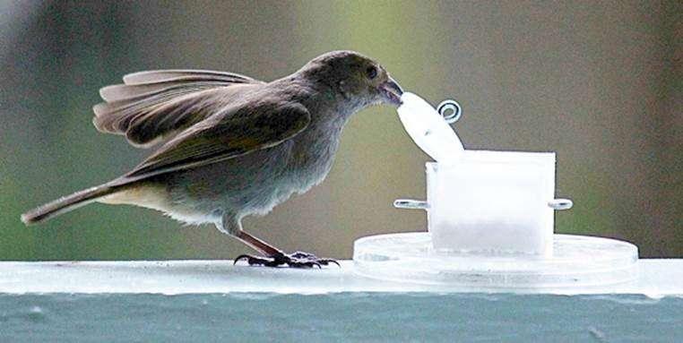 City birds are smarter than country birds