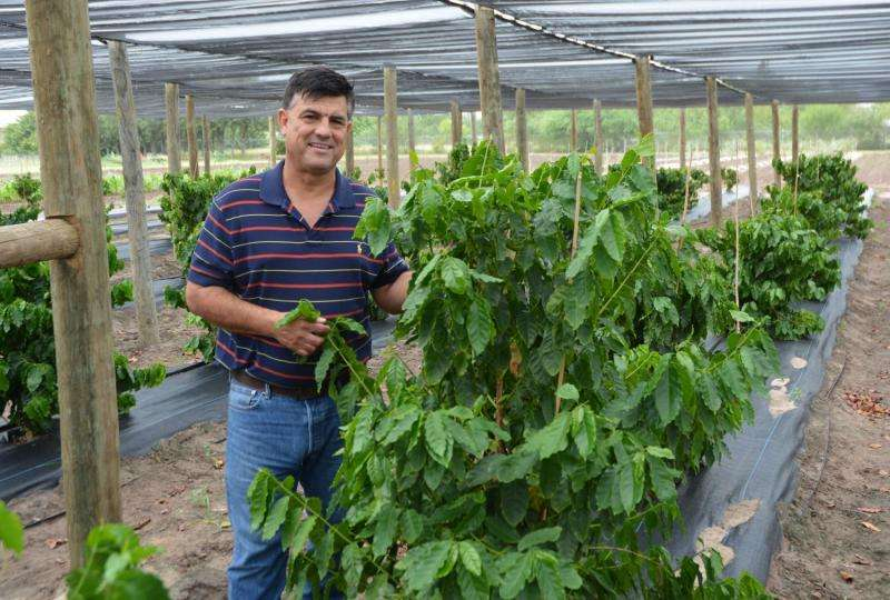 Coffee farm thriving in the Rio Grande Valley