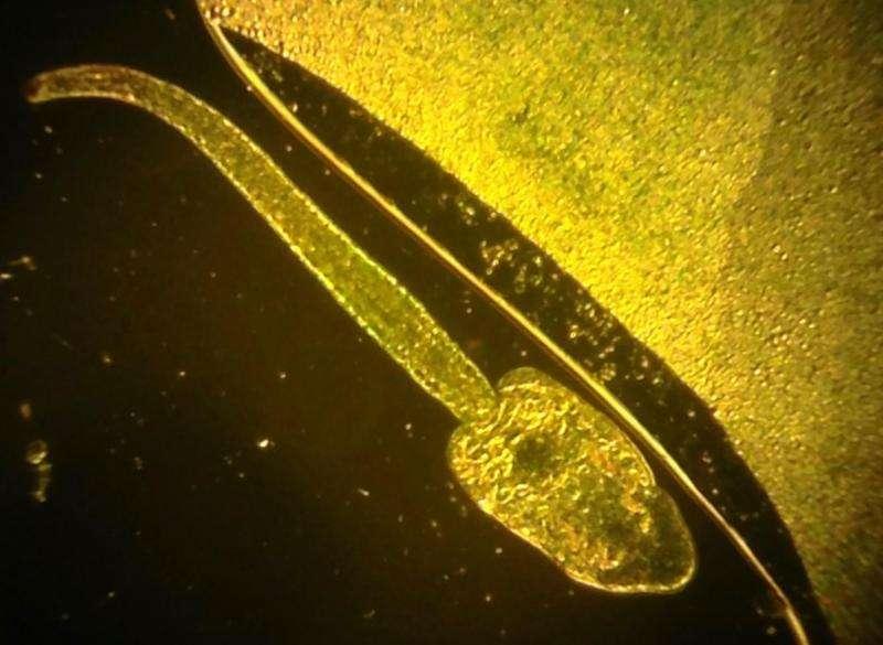 Common pesticides kill amphibian parasites, study finds