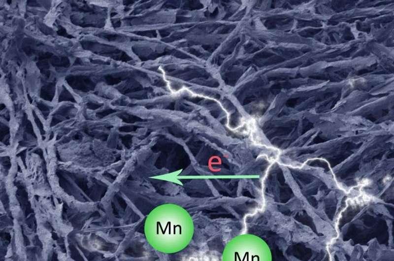 Could bread mold build a better rechargeable battery?