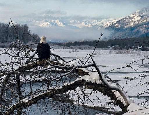 Critics question mine exploration near Alaska eagle preserve