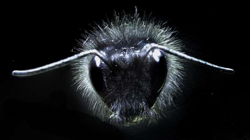 Dancing hairs alert bees to floral electric fields