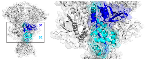 Deep dive into NMDA receptor variation and link to epilepsy, ID