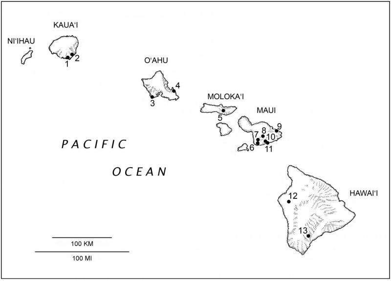 Discovery of extinct bat doubles diversity of native Hawaiian land mammals