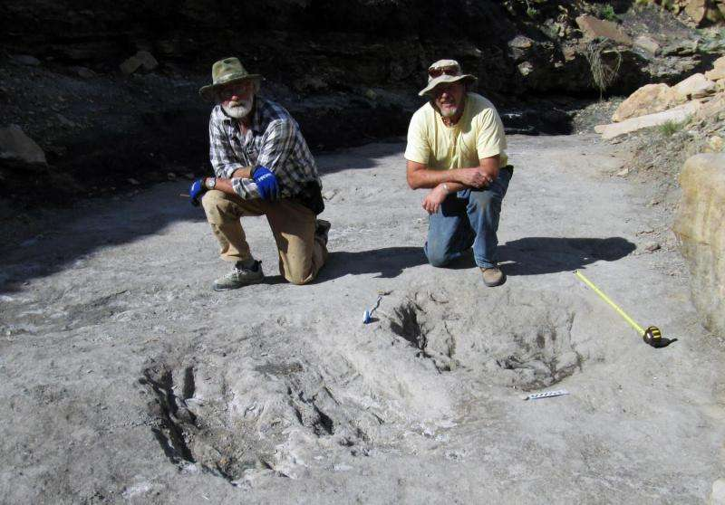 Discovery shows dinosaurs may have been the original lovebirds