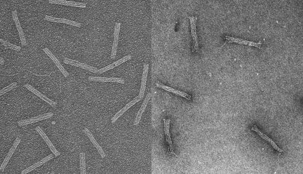 DNA 'Trojan horse' smuggles drugs into resistant cancer cells