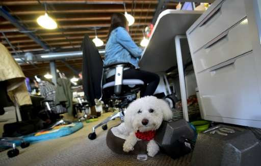 DogFin, a Bichon Frise, rests in a basket at the company offices of DogVacay in Santa Monica, California on March 21, 2016