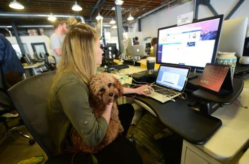 DogVacay employee Amanda Huggins holds guest dog Fanny while working at her computer terminal at the company's offices in Santa