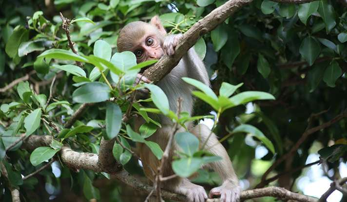 Do monkeys know when they need to 'Google it'?