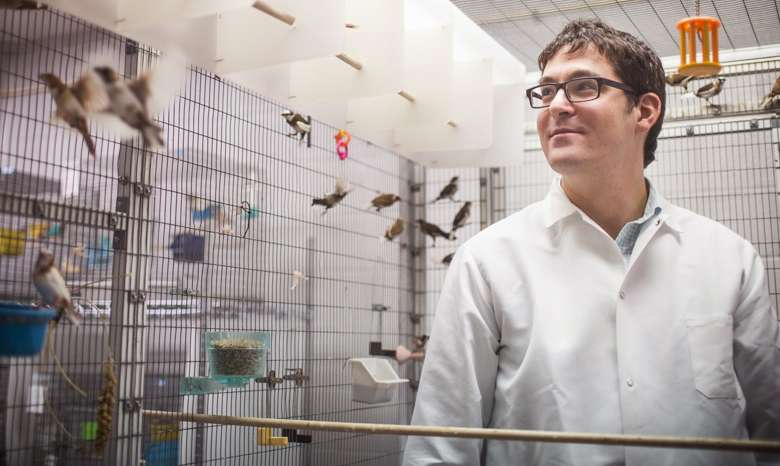Dopamine key to vocal learning, songbird study finds