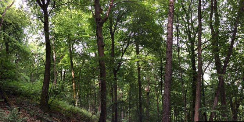 Droughts across Europe affect British trees most