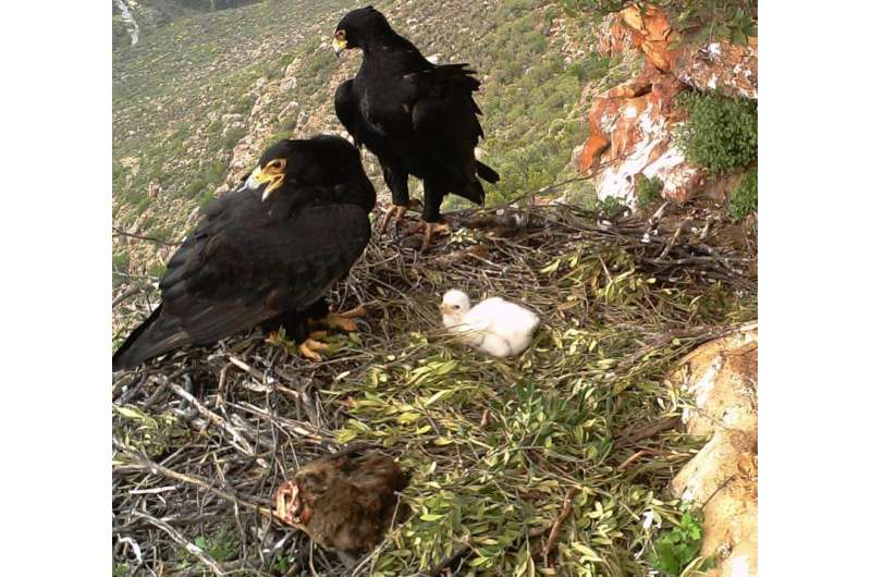 Eagles and agriculture coexist in South Africa