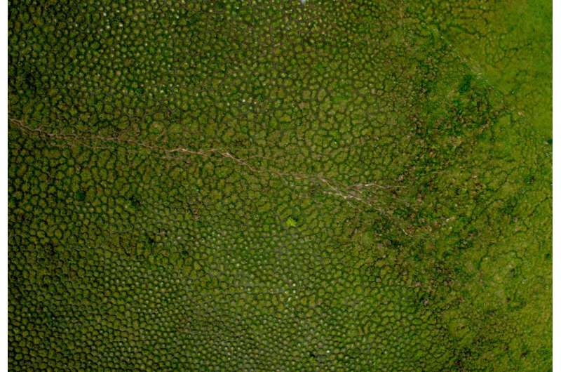 Earthworms build huge mounds dotting tropical wetlands in South America
