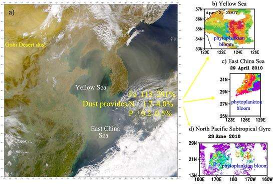 East Asian dust deposition impacts on marine biological productivity