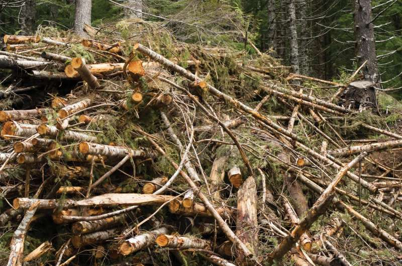 Economics of forest biomass raise hurdles for rural development