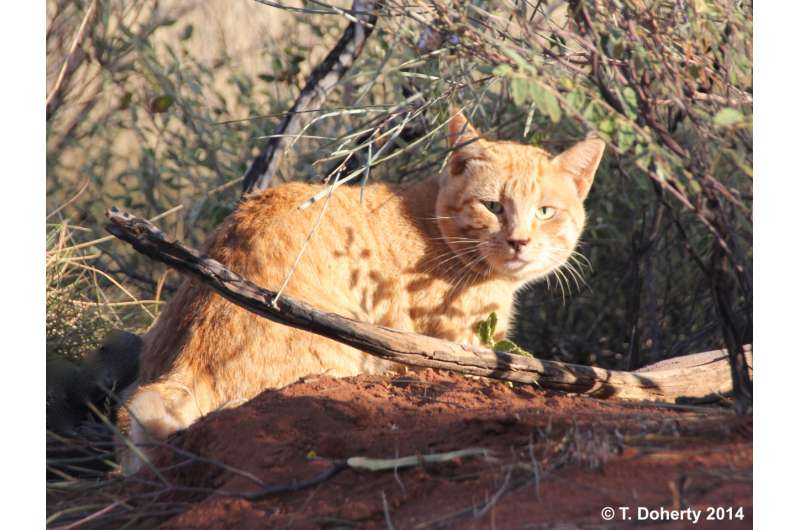Efforts are needed to protect native species from feral cats