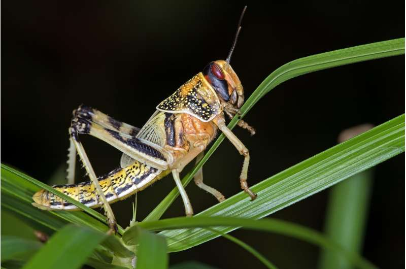 Engineers to use cyborg insects as biorobotic sensing machines
