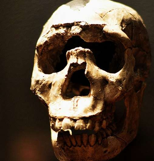 Evolution purged many Neanderthal genes from human genome