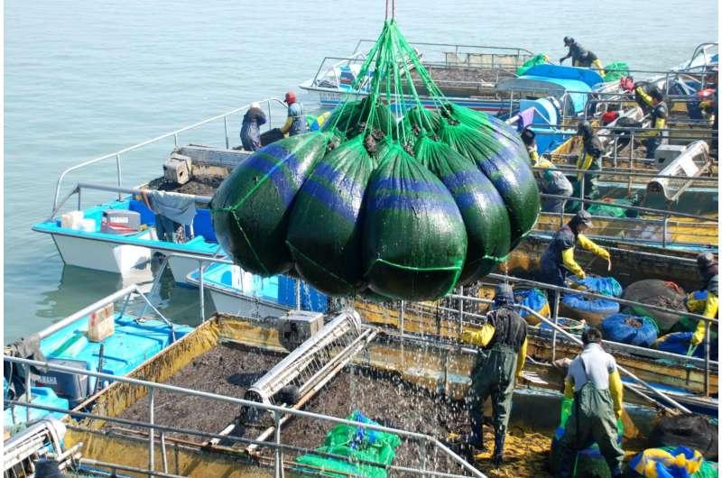 Experts warn booming seaweed industry