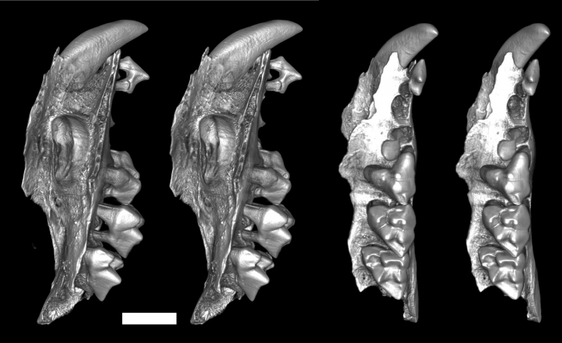 Extinct family of bizarre snail-eating marsupials discovered