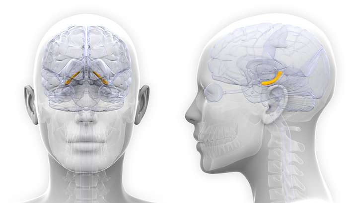 Female brains change in sync with hormones