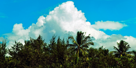 Fewer low clouds in the tropics