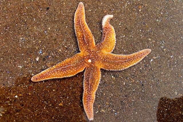 Fighting a sea star die-off