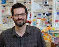 Finding new targets to treat vascular damage