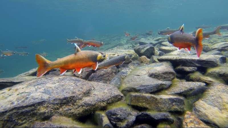 Fish sperm race for reproductive success