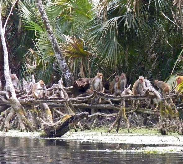 Florida's monkey river