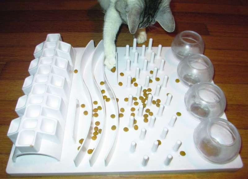 Food puzzles enhance feline wellbeing