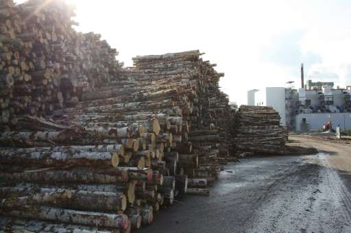 Forestry products paper and cardboard reclaimed the top spot as Finland's main export in 2015