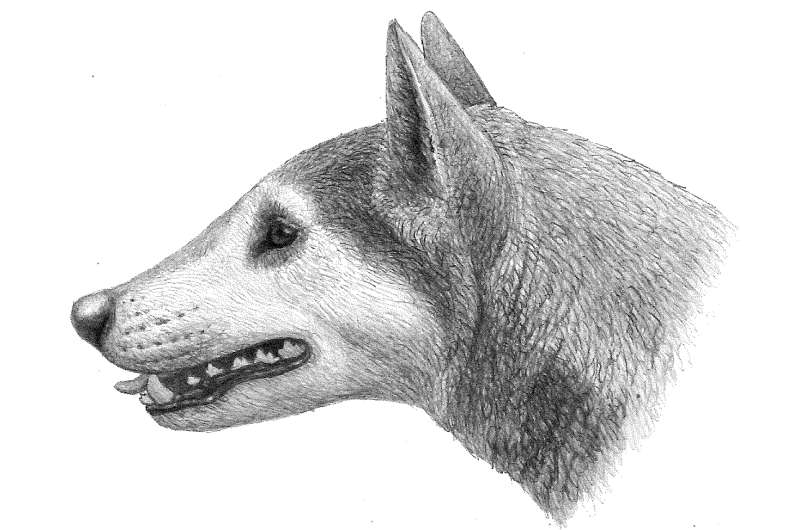 Fossil dog represents a new species, Penn paleontology grad student finds