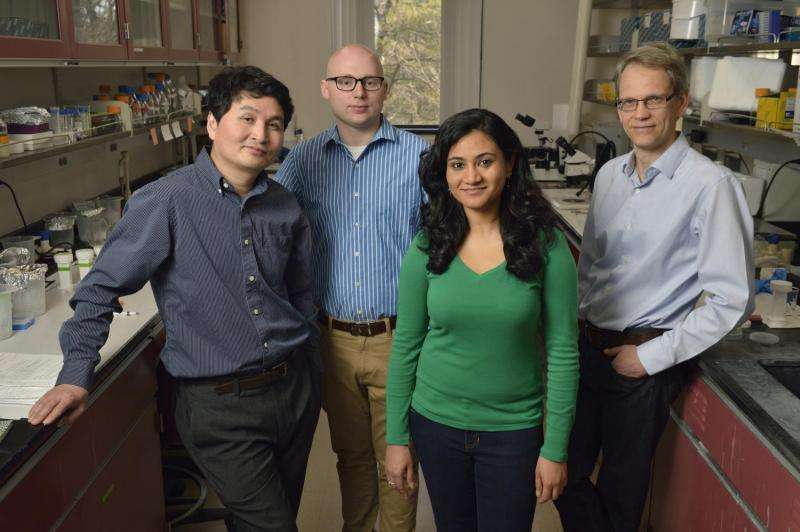 Fralin researchers use new technology to sequence mosquito sex chromosome