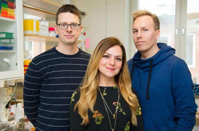 Fresh insights into early human embryo development