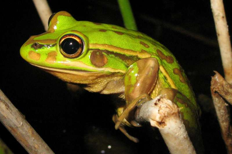Frog reproduction in created ponds may be affected by disease and food availability