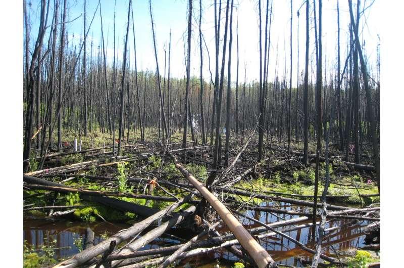 From fire breaks to fire hazards
