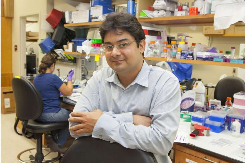 FSU researcher targets on-off switch of cardiac contraction