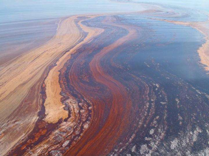 Genetic potential of oil-eating bacteria from the BP oil spill decoded