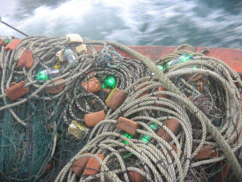Green light stops sea turtle deaths